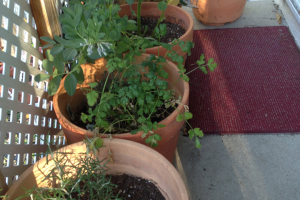 002-potted plants on patio_IMG_2631